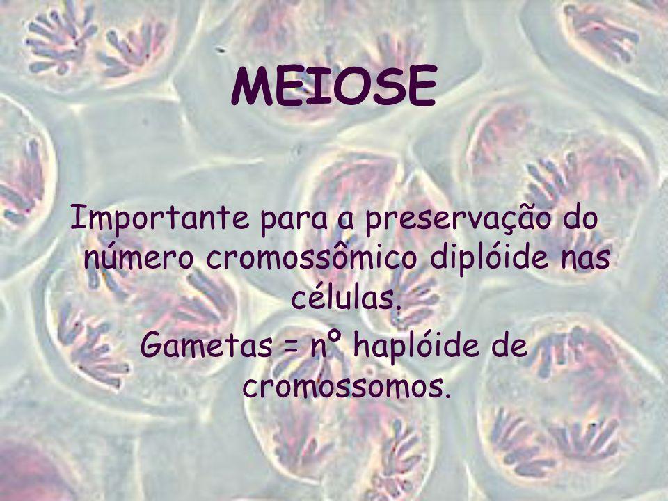 MEIOSE Ocorre apenas nas células germinativas.