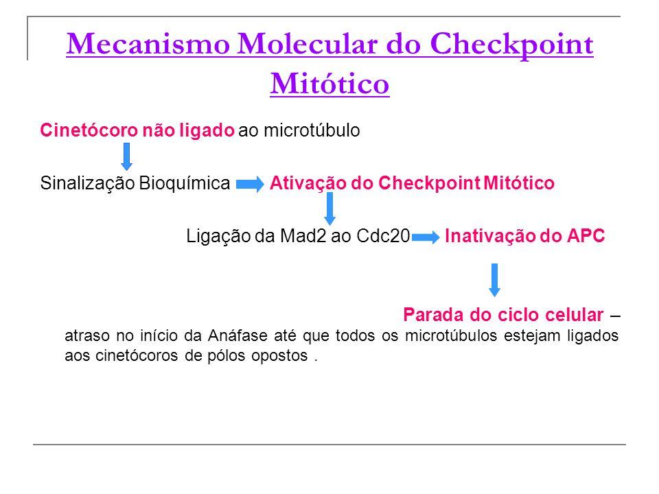 Mecanismo Molecular do Checkpoint Mitótico Cinetócoro não ligado ao microtúbulo Sinalização Bioquímica Ativação do Checkpoint Mitótico Ligação da Mad2