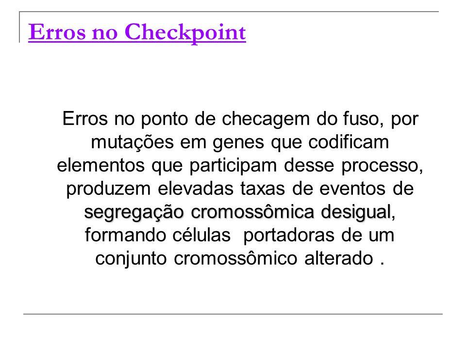Erros no Checkpoint segregação cromossômica desigual Erros no ponto de checagem do fuso, por mutações em genes que codificam elementos que participam
