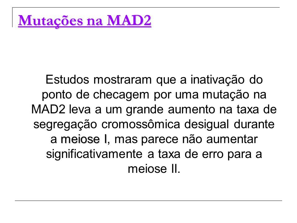 Mutações na MAD2 meiose I Estudos mostraram que a inativação do ponto de checagem por uma mutação na MAD2 leva a um grande aumento na taxa de segregaç