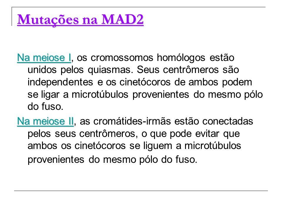 Mutações na MAD2 Na meiose I Na meiose I, os cromossomos homólogos estão unidos pelos quiasmas. Seus centrômeros são independentes e os cinetócoros de