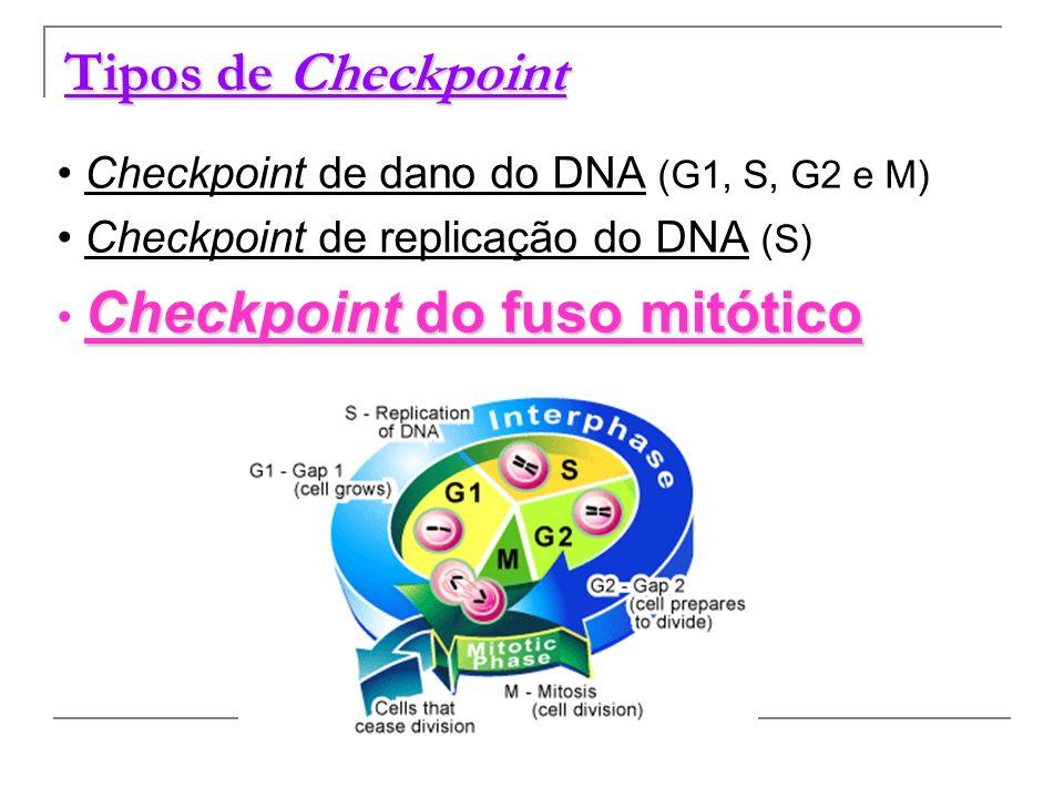 Tipos de Checkpoint Checkpoint de dano do DNA (G1, S, G2 e M) Checkpoint de replicação do DNA (S) Checkpoint do fuso mitótico