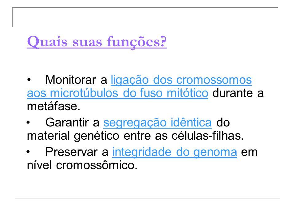 Quais suas funções? Monitorar a ligação dos cromossomos aos microtúbulos do fuso mitótico durante a metáfase. Garantir a segregação idêntica do materi