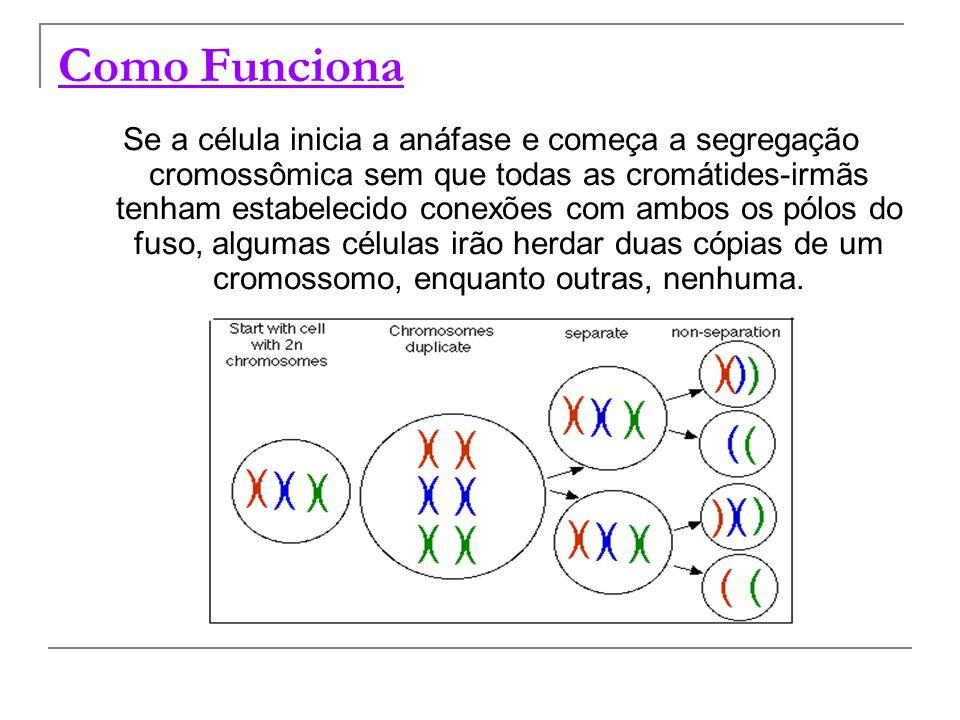 Como Funciona Se a célula inicia a anáfase e começa a segregação cromossômica sem que todas as cromátides-irmãs tenham estabelecido conexões com ambos