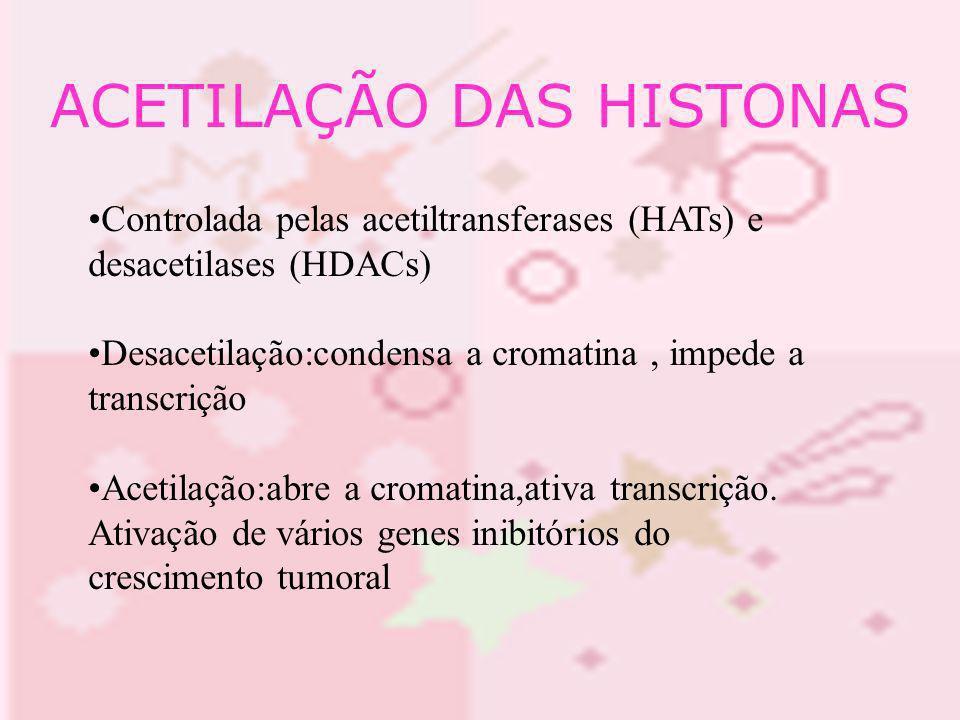 ACETILAÇÃO DAS HISTONAS Controlada pelas acetiltransferases (HATs) e desacetilases (HDACs) Desacetilação:condensa a cromatina, impede a transcrição Ac