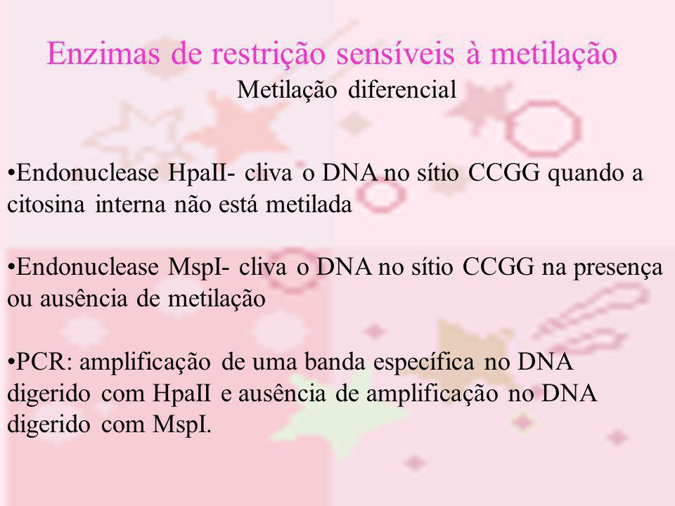 Enzimas de restrição sensíveis à metilação Metilação diferencial Endonuclease HpaII- cliva o DNA no sítio CCGG quando a citosina interna não está meti