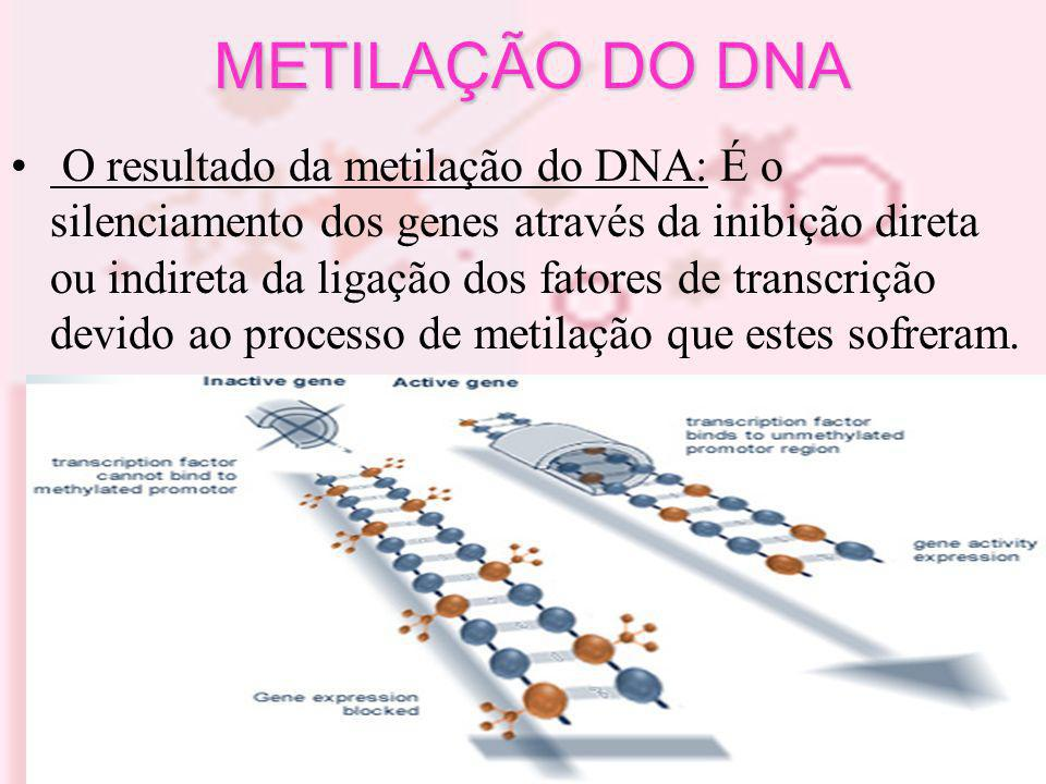 ACETILAÇÃO DAS HISTONAS Controlada pelas acetiltransferases (HATs) e desacetilases (HDACs) Desacetilação:condensa a cromatina, impede a transcrição Acetilação:abre a cromatina,ativa transcrição.