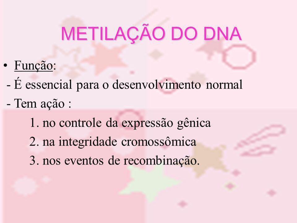Função: - É essencial para o desenvolvimento normal - Tem ação : 1. no controle da expressão gênica 2. na integridade cromossômica 3. nos eventos de r