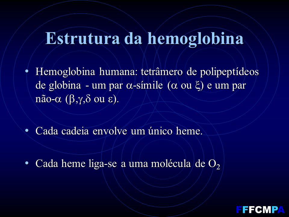 Estrutura da hemoglobina Hemoglobina humana: tetrâmero de polipeptídeos de globina - um par -símile ( ou ) e um par não- (,, ou ). Hemoglobina humana: