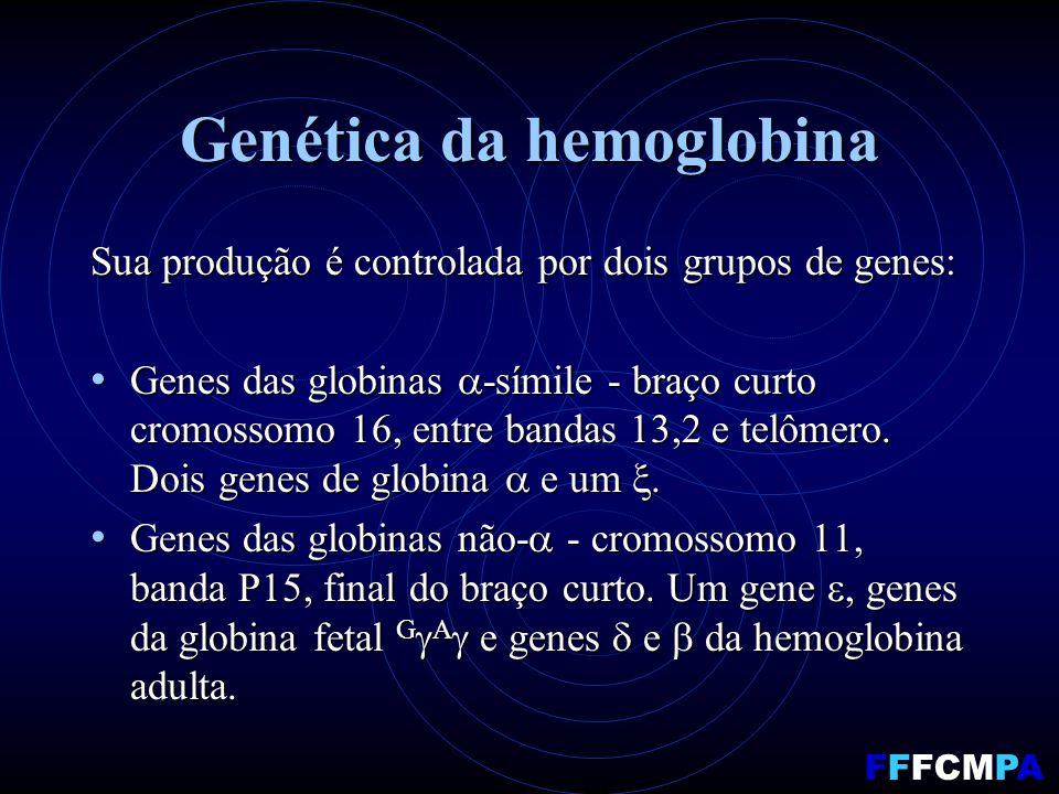 Genética da hemoglobina Sua produção é controlada por dois grupos de genes: Genes das globinas -símile - braço curto cromossomo 16, entre bandas 13,2 e telômero.