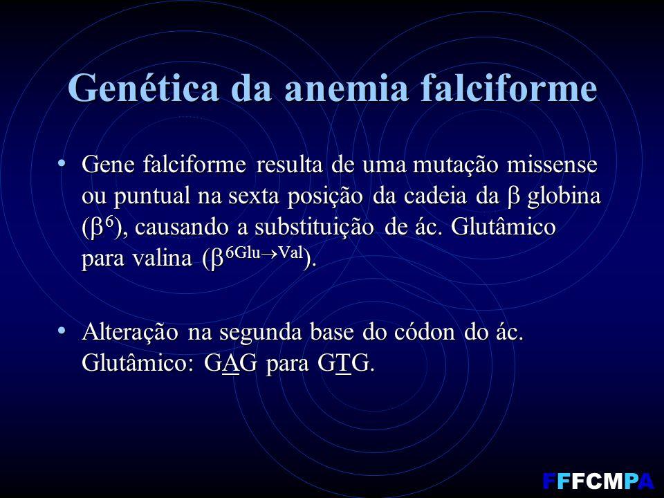Genética da anemia falciforme Gene falciforme resulta de uma mutação missense ou puntual na sexta posição da cadeia da globina ( 6 ), causando a substituição de ác.