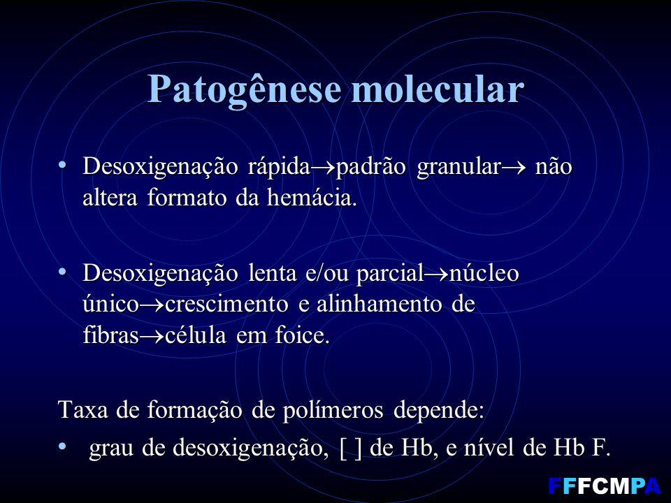Patogênese molecular Desoxigenação rápida padrão granular não altera formato da hemácia. Desoxigenação rápida padrão granular não altera formato da he