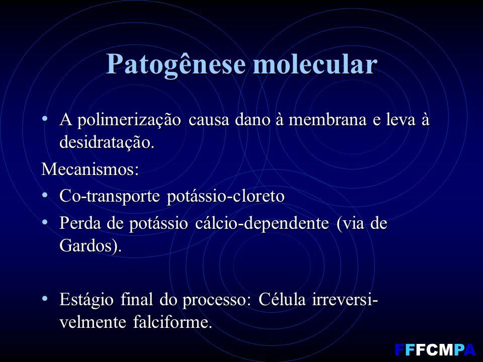 Patogênese molecular A polimerização causa dano à membrana e leva à desidratação.