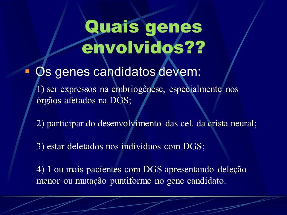 Quais genes envolvidos?? Os genes candidatos devem: 1) ser expressos na embriogênese, especialmente nos órgãos afetados na DGS; 2) participar do desen