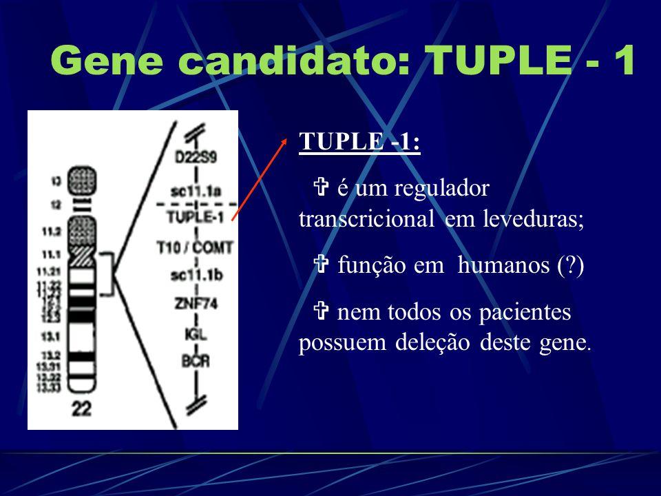 Gene candidato: TUPLE - 1 TUPLE -1: é um regulador transcricional em leveduras; função em humanos (?) nem todos os pacientes possuem deleção deste gen