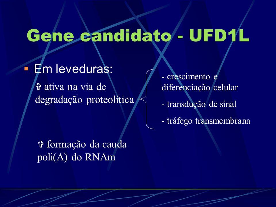 Gene candidato - UFD1L Em leveduras: ativa na via de degradação proteolítica - crescimento e diferenciação celular - transdução de sinal - tráfego tra