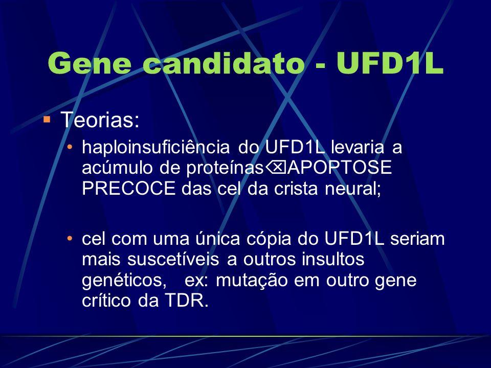 Gene candidato - UFD1L Teorias: haploinsuficiência do UFD1L levaria a acúmulo de proteínas APOPTOSE PRECOCE das cel da crista neural; cel com uma únic