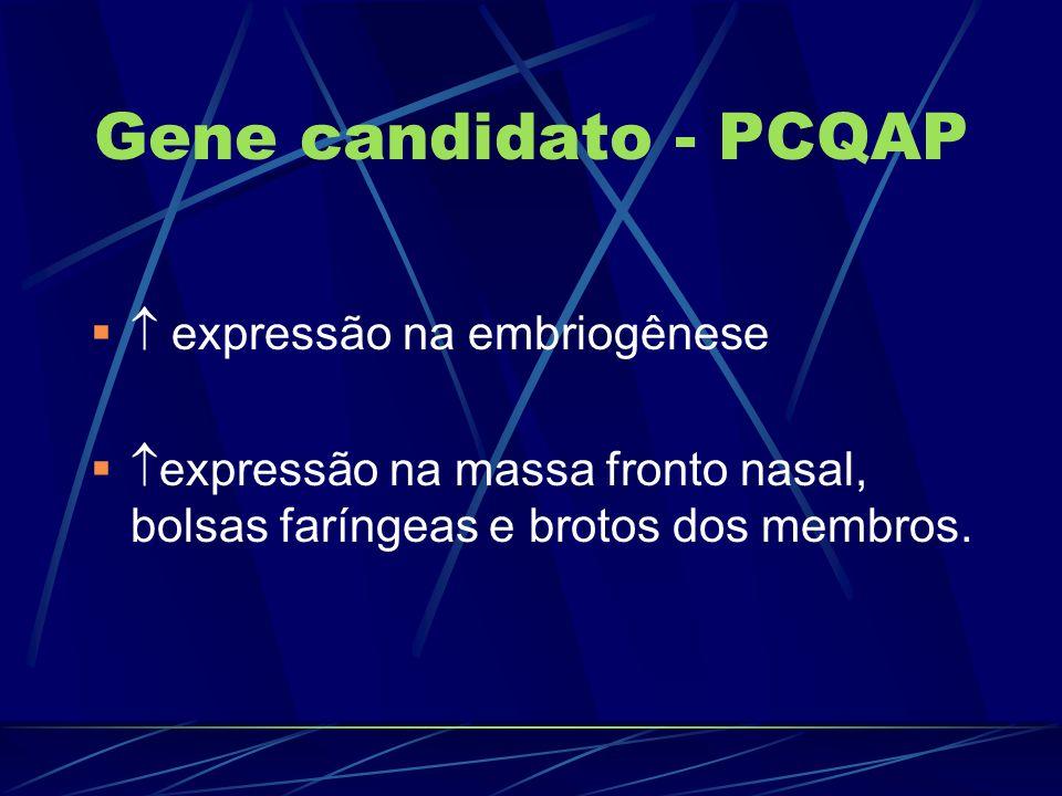 Gene candidato - PCQAP expressão na embriogênese expressão na massa fronto nasal, bolsas faríngeas e brotos dos membros.