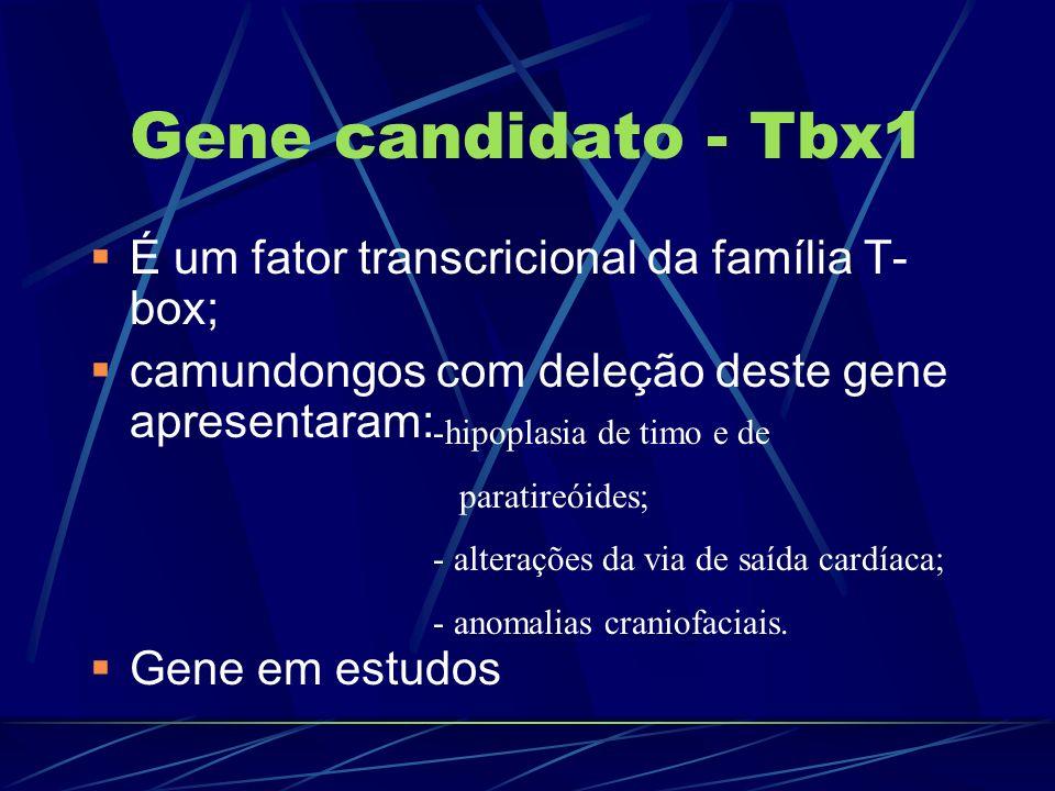 Gene candidato - Tbx1 É um fator transcricional da família T- box; camundongos com deleção deste gene apresentaram: Gene em estudos -hipoplasia de tim