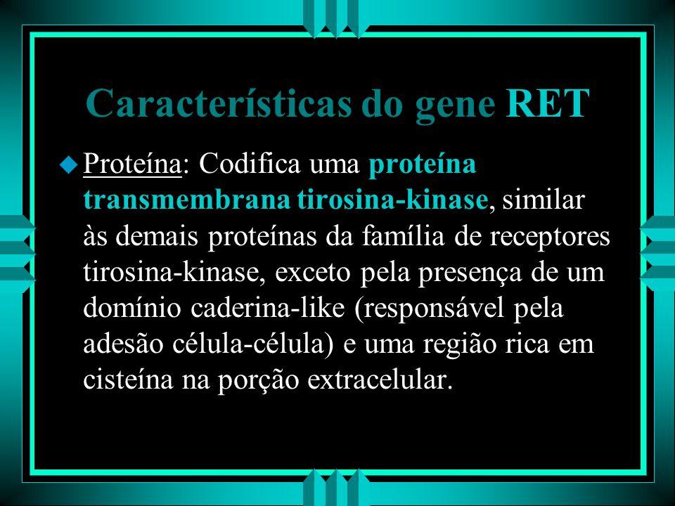 Características do gene RET u Proteína: Codifica uma proteína transmembrana tirosina-kinase, similar às demais proteínas da família de receptores tiro