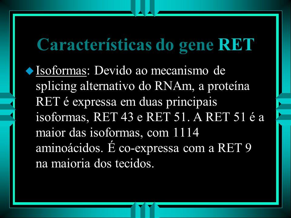 Características do gene RET u Isoformas: Devido ao mecanismo de splicing alternativo do RNAm, a proteína RET é expressa em duas principais isoformas,
