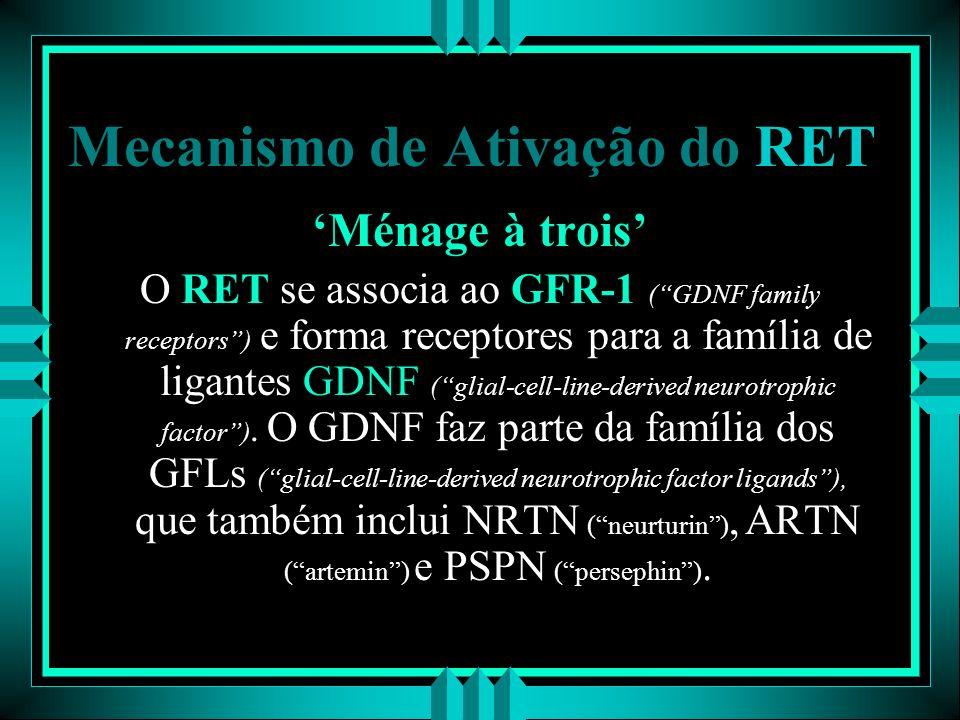 Mecanismo de Ativação do RET Ménage à trois O RET se associa ao GFR-1 (GDNF family receptors) e forma receptores para a família de ligantes GDNF (glia