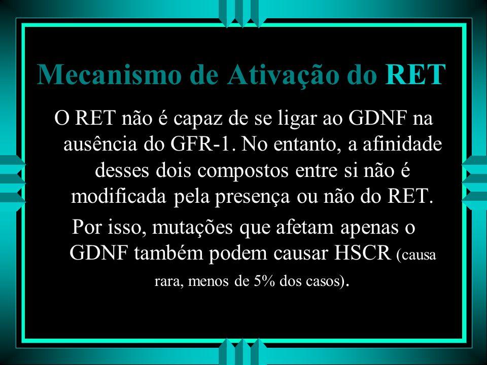 Mecanismo de Ativação do RET O RET não é capaz de se ligar ao GDNF na ausência do GFR-1. No entanto, a afinidade desses dois compostos entre si não é