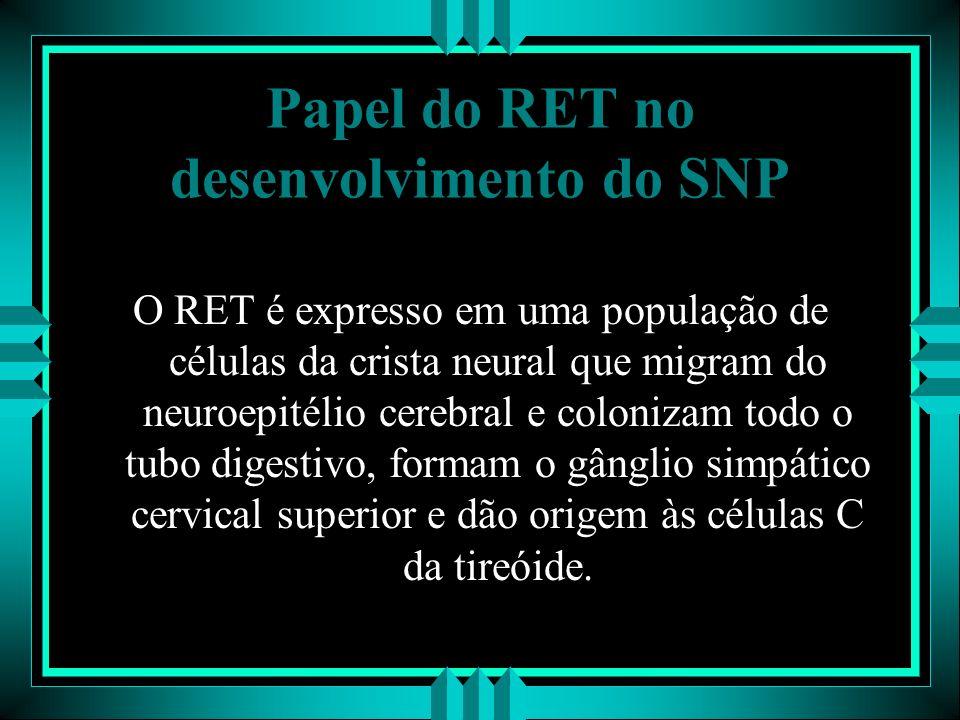 Papel do RET no desenvolvimento do SNP O RET é expresso em uma população de células da crista neural que migram do neuroepitélio cerebral e colonizam
