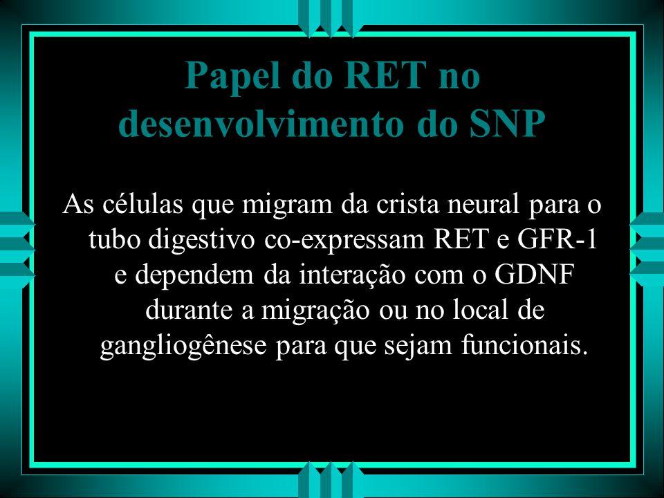 Papel do RET no desenvolvimento do SNP As células que migram da crista neural para o tubo digestivo co-expressam RET e GFR-1 e dependem da interação c