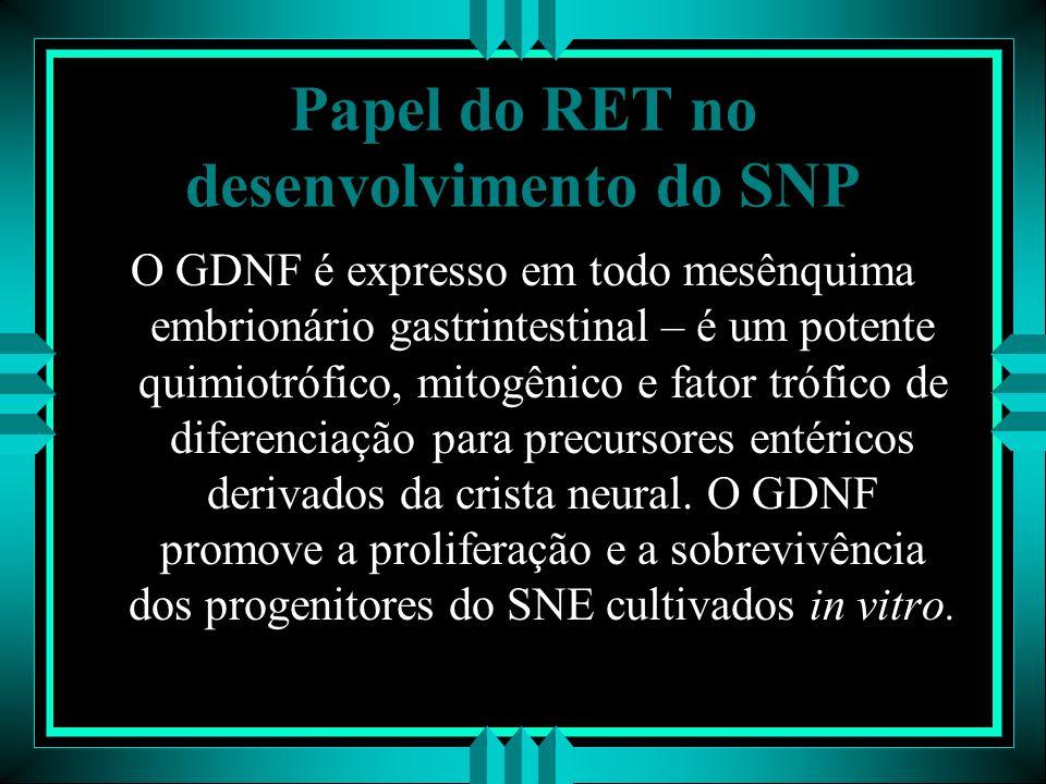 Papel do RET no desenvolvimento do SNP O GDNF é expresso em todo mesênquima embrionário gastrintestinal – é um potente quimiotrófico, mitogênico e fat