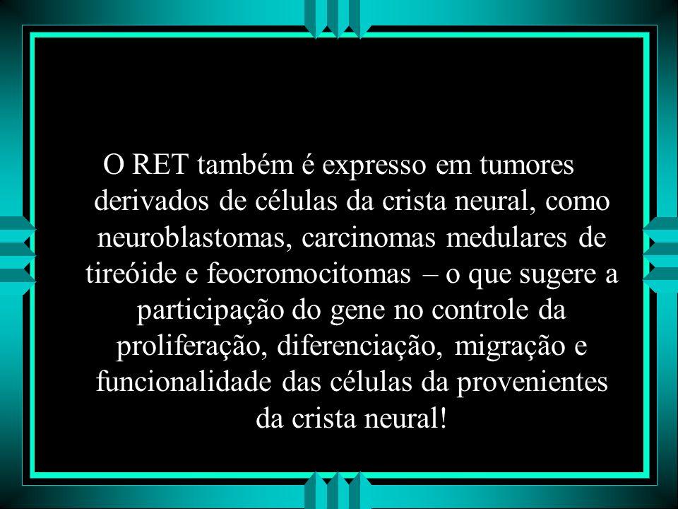 O RET também é expresso em tumores derivados de células da crista neural, como neuroblastomas, carcinomas medulares de tireóide e feocromocitomas – o