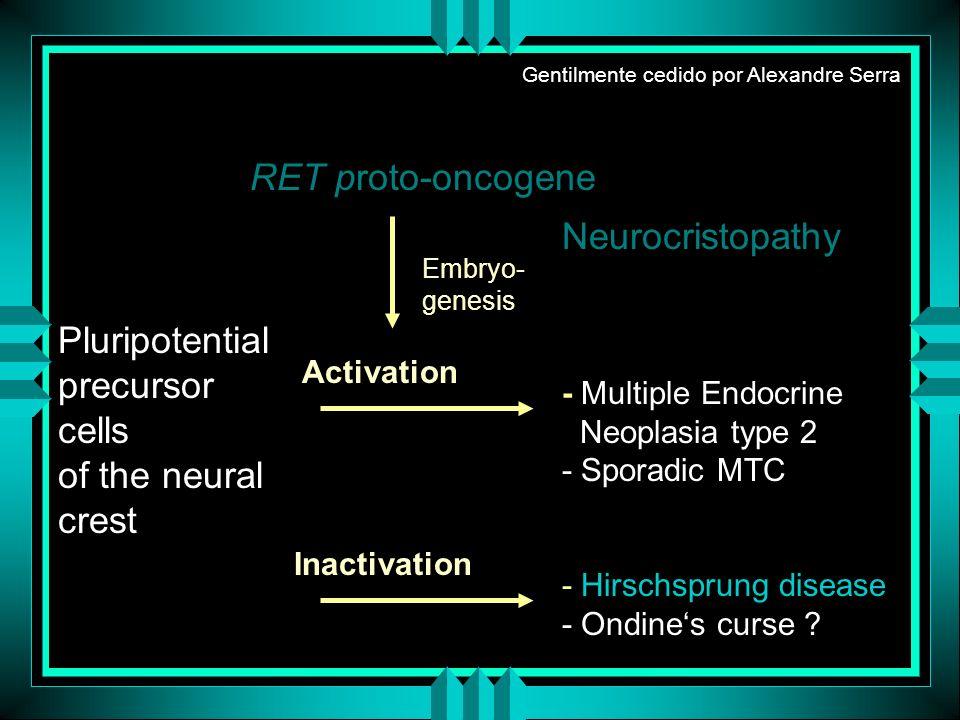 RET proto-oncogene Activation Inactivation Neurocristopathy - Multiple Endocrine Neoplasia type 2 - Sporadic MTC - Hirschsprung disease - Ondines curs