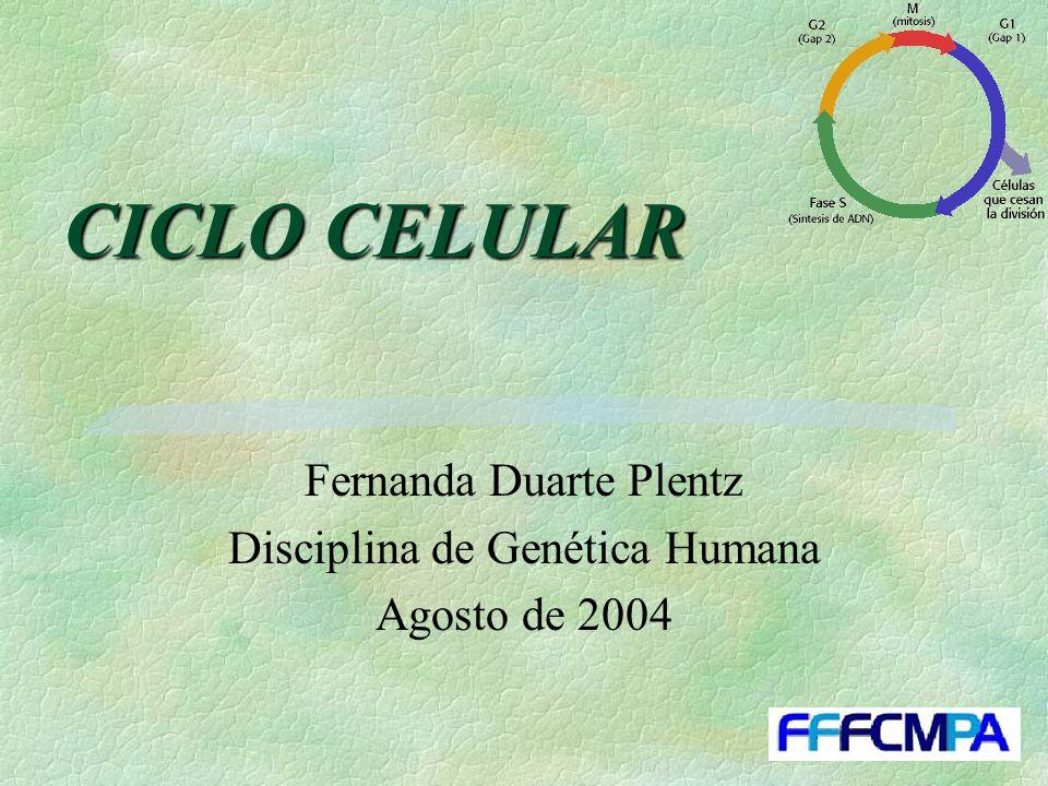 CICLO CELULAR Fernanda Duarte Plentz Disciplina de Genética Humana Agosto de 2004