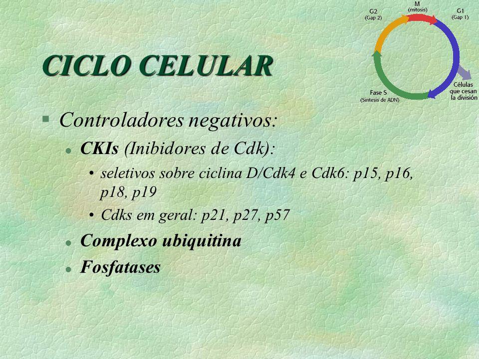 CICLO CELULAR §Controladores negativos: l CKIs (Inibidores de Cdk): seletivos sobre ciclina D/Cdk4 e Cdk6: p15, p16, p18, p19 Cdks em geral: p21, p27,