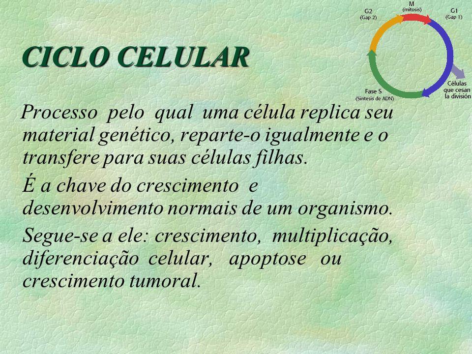 CICLO CELULAR Processo pelo qual uma célula replica seu material genético, reparte-o igualmente e o transfere para suas células filhas. É a chave do c