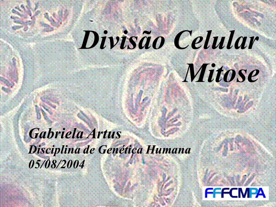 Divisão Celular Mitose Gabriela Artus Disciplina de Genética Humana 05/08/2004