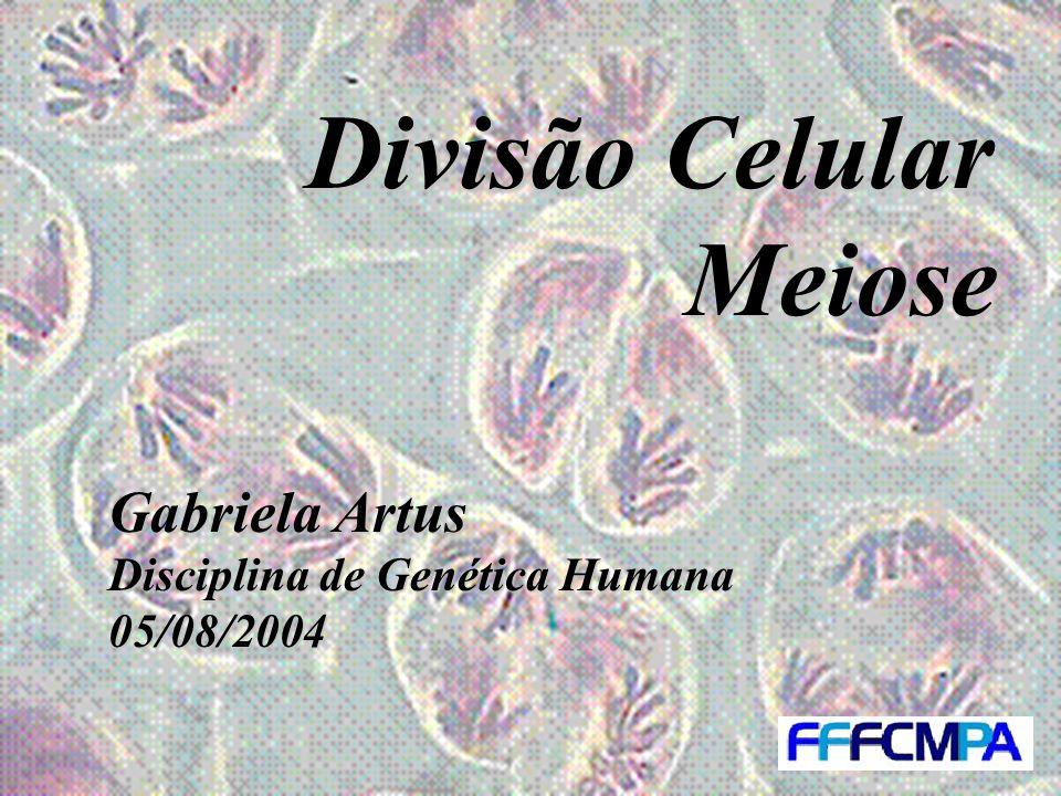 Divisão Celular Meiose Gabriela Artus Disciplina de Genética Humana 05/08/2004