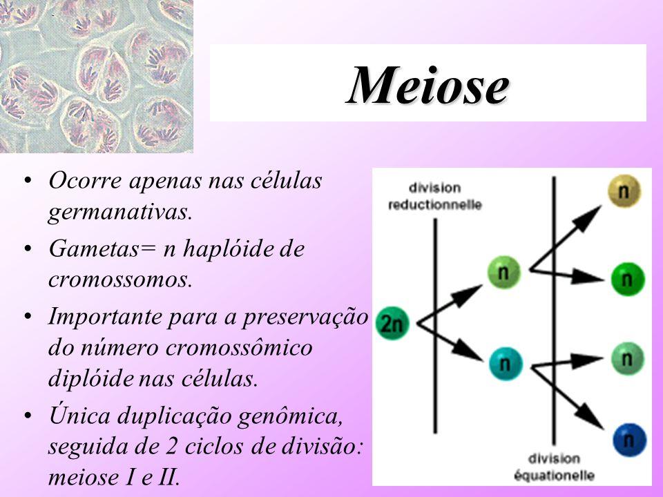 Meiose Ocorre apenas nas células germanativas. Gametas= n haplóide de cromossomos. Importante para a preservação do número cromossômico diplóide nas c