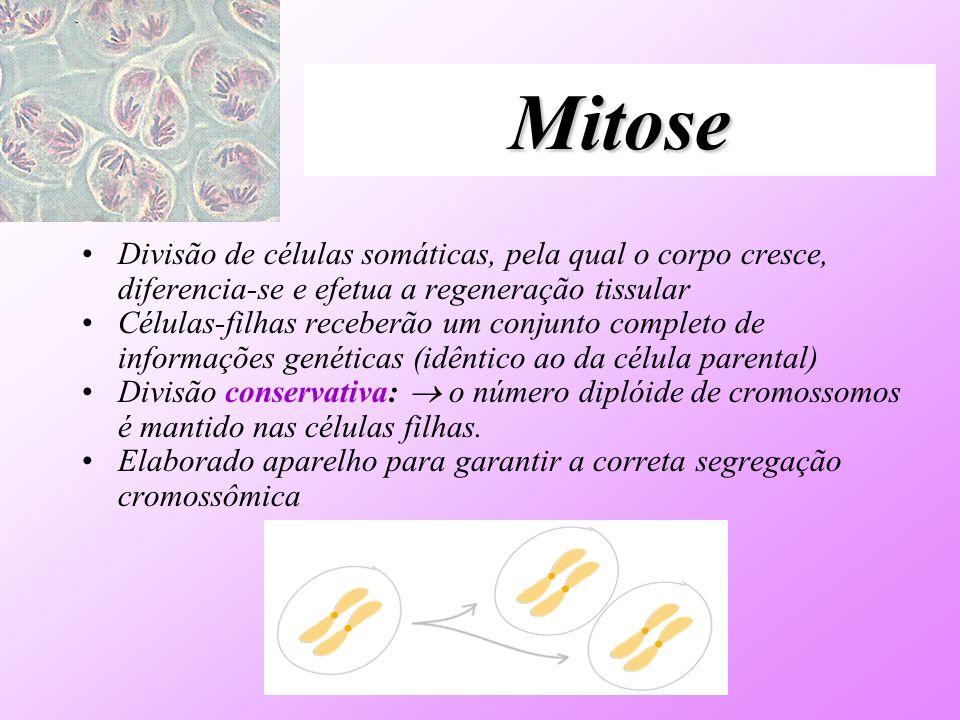 Mitose Divisão de células somáticas, pela qual o corpo cresce, diferencia-se e efetua a regeneração tissular Células-filhas receberão um conjunto comp