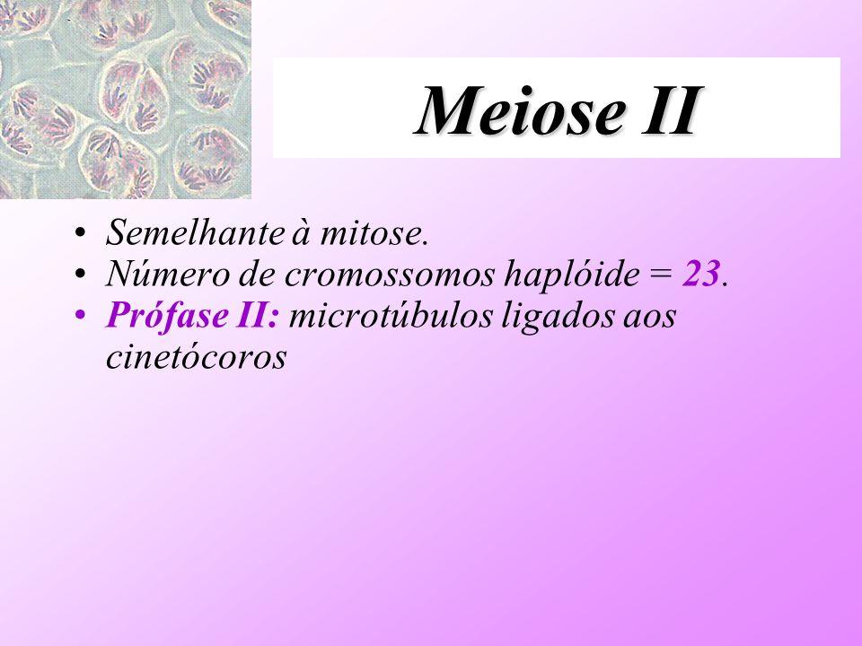 Meiose II Semelhante à mitose. Número de cromossomos haplóide = 23. Prófase II: microtúbulos ligados aos cinetócoros