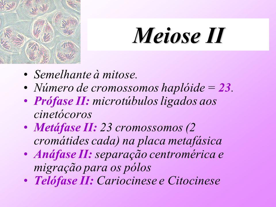 Meiose II Semelhante à mitose. Número de cromossomos haplóide = 23. Prófase II: microtúbulos ligados aos cinetócoros Metáfase II: 23 cromossomos (2 cr