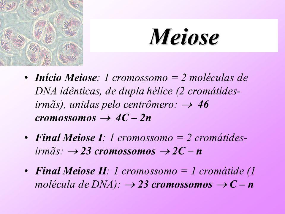 Meiose Início Meiose: 1 cromossomo = 2 moléculas de DNA idênticas, de dupla hélice (2 cromátides- irmãs), unidas pelo centrômero: 46 cromossomos 4C –
