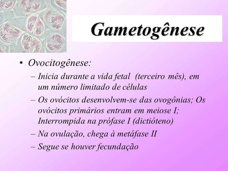 Gametogênese Ovocitogênese: –Inicia durante a vida fetal (terceiro mês), em um número limitado de células –Os ovócitos desenvolvem-se das ovogônias; O