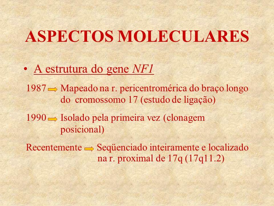 ASPECTOS MOLECULARES A estrutura do gene NF1 1987 Mapeado na r.