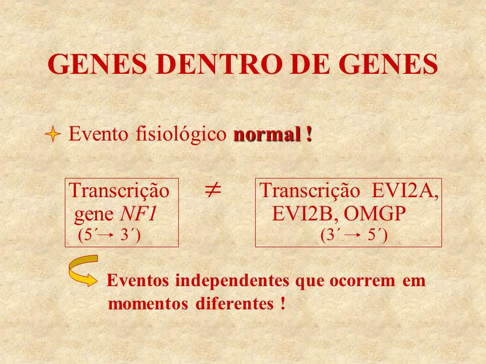 GENES DENTRO DE GENES normal ! Evento fisiológico normal ! Transcrição Transcrição EVI2A, gene NF1 EVI2B, OMGP (5´ 3´) (3´ 5´) Eventos independentes q