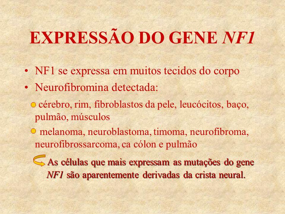 EXPRESSÃO DO GENE NF1 NF1 se expressa em muitos tecidos do corpo Neurofibromina detectada: cérebro, rim, fibroblastos da pele, leucócitos, baço, pulmão, músculos melanoma, neuroblastoma, timoma, neurofibroma, neurofibrossarcoma, ca cólon e pulmão As células que mais expressam as mutações do gene NF1 são aparentemente derivadas da crista neural.