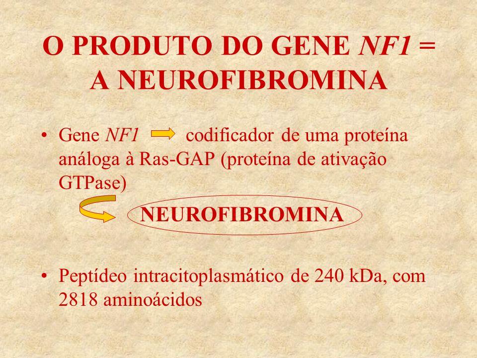 O PRODUTO DO GENE NF1 = A NEUROFIBROMINA Gene NF1 codificador de uma proteína análoga à Ras-GAP (proteína de ativação GTPase) NEUROFIBROMINA Peptídeo intracitoplasmático de 240 kDa, com 2818 aminoácidos