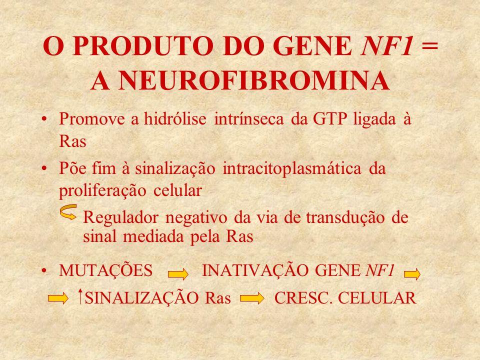 O PRODUTO DO GENE NF1 = A NEUROFIBROMINA Promove a hidrólise intrínseca da GTP ligada à Ras Põe fim à sinalização intracitoplasmática da proliferação celular Regulador negativo da via de transdução de sinal mediada pela Ras MUTAÇÕES INATIVAÇÃO GENE NF1 SINALIZAÇÃO Ras CRESC.