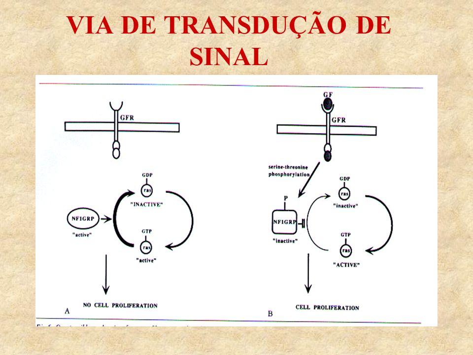 VIA DE TRANSDUÇÃO DE SINAL