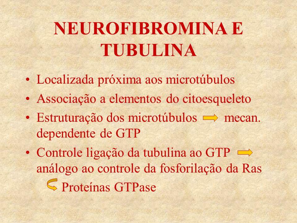 NEUROFIBROMINA E TUBULINA Localizada próxima aos microtúbulos Associação a elementos do citoesqueleto Estruturação dos microtúbulos mecan.